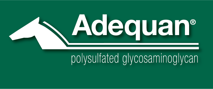 ADEQUAN Logo 2013_White_GreenBack.png-5-11-18
